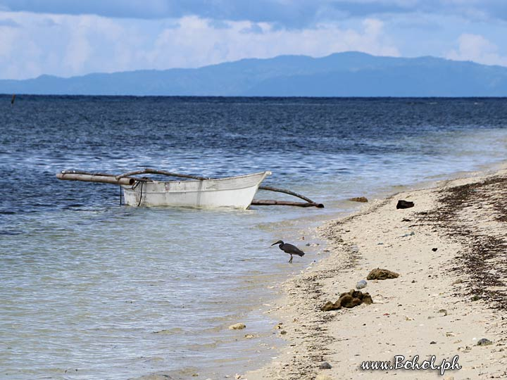 Along the Beach, Pamilacan Island